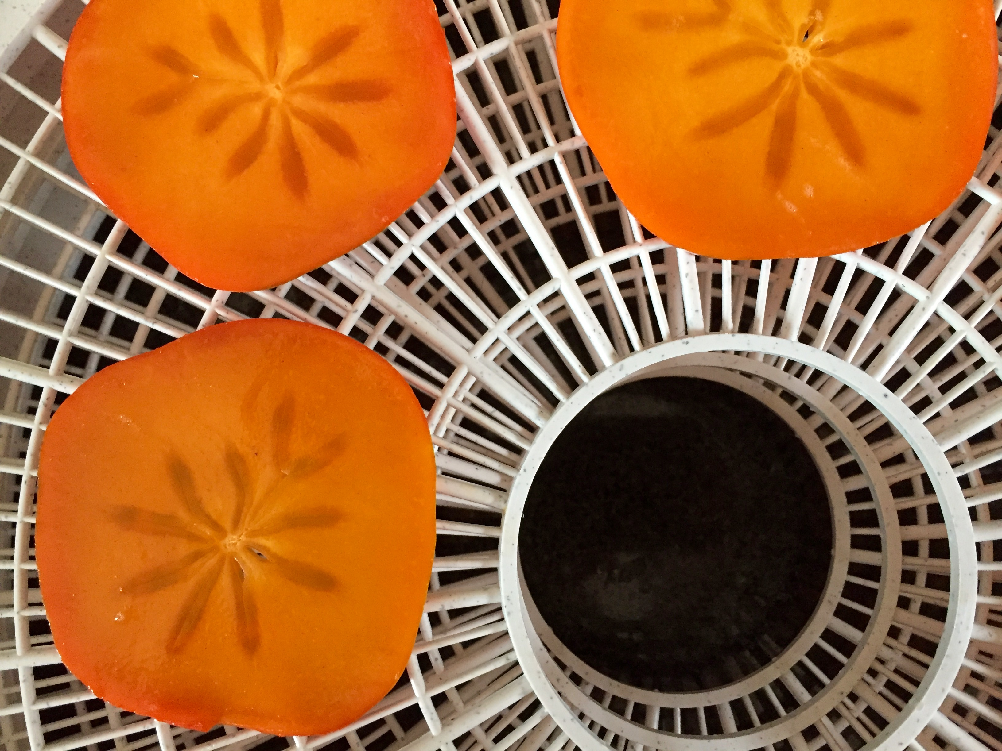 Drying Persimmon Slices | NaBloPoMo Day 6